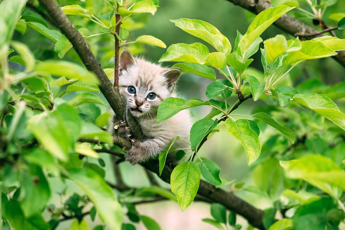 Kitten stuck in a tree