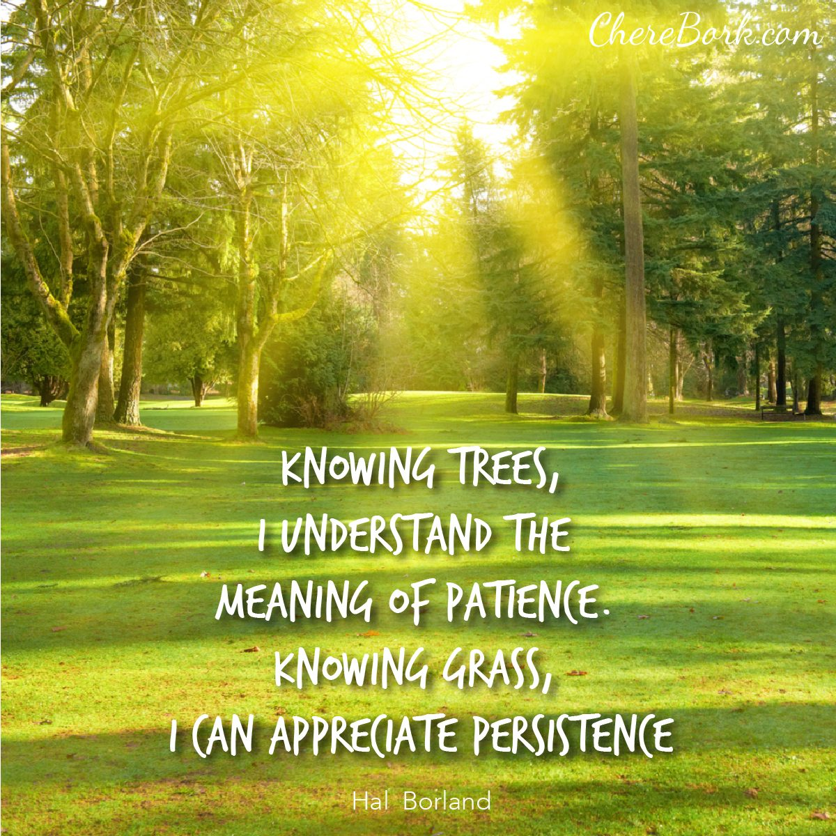 Knowing trees, I understand the meaning of patience. Knowing grass, I can appreciate persistence. -Hal Borland
